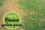 5 Fixes for Lawn Spots