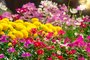 Instructions For Transplanting Perennial Flowers