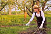 Young woman cleaning tree limbs in the fall.