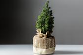 How to Transplant a Hemlock Tree