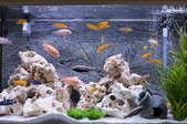 An aquarium.