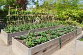 A backyard garden with planter boxes and a trellis.