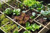 edible garden with veggies, herbs, and fruits