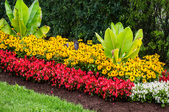 A flower bed.