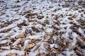 A light dusting of snow over mulch in a garden.