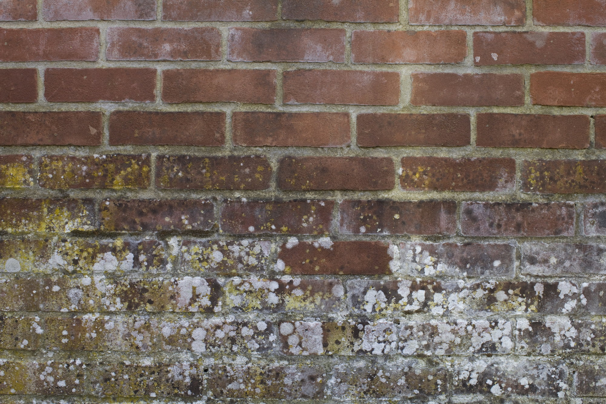 How To Clean Mold Off Brick Doityourself Com