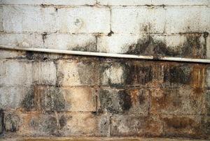 moldy basement wall