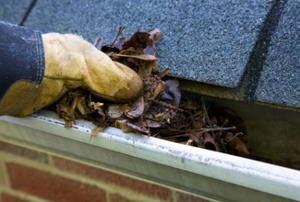 A pair of gloved hands pulls out leaves from a gutter.