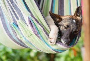 Dog sleeping in a hammock