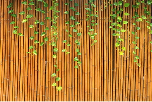 a bamboo fence with ivy growing down it