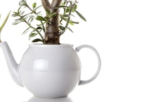 plants growing from a white teapot