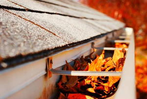 A rain gutter full of leaves.