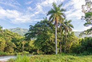 Palm Tree 101
