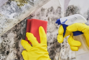A  pair of hands cleaning mo;d and mildew from a wall with a red sponge and a spray bottle.