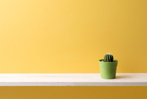 a small cactus sitting on a white shelf that is mounted to a  yellow wall