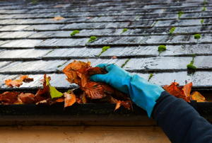 A rubber-gloved hand pulling dead leaves out of a gutter on a rainy day.