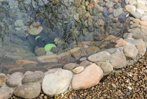 backyard pond outlined by rocks