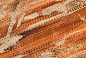 A close look at a piece of damaged laminate floor.