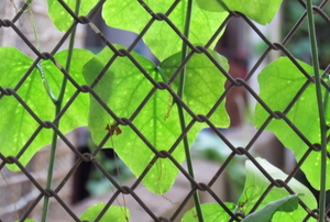 wire fence with leaves