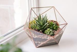 plants in a terrarium