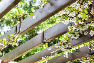 flowers growing through a pergola