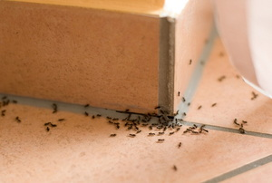 Prevent Indoor Pests this Summer