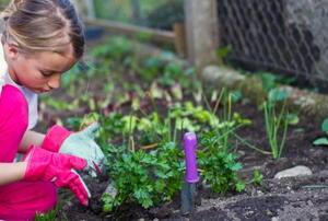 A little girl in the home vegetable garden.
