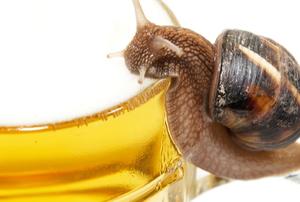 slug drinking beer