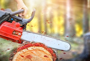 hands cutting a felled tree with a chainsaw