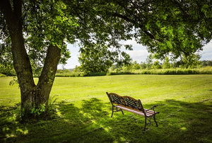 A bench under a large shade tree