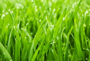 A close up on grass.