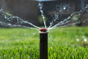 A sprinkler head spraying water out over a green lawn.
