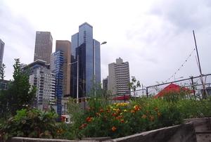 skyline and garden
