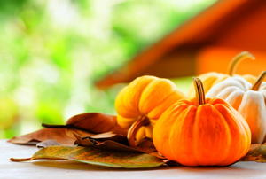 Small pumpkins resting haphazardly on a bed of fall leaves.