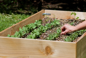A raised garden bed