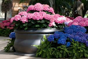 home garden with hydrangeas