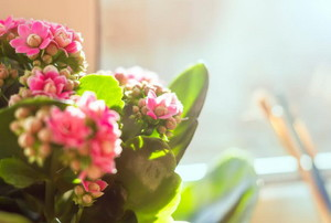A houseplant with pink flower and green leaves in front of a window.