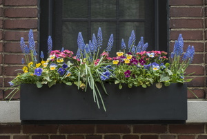 A black window box filled with plants.