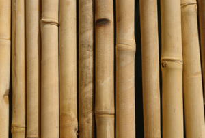 row of dried bamboo rods