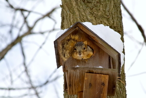 squirrel sticking its head out of a birdhouse