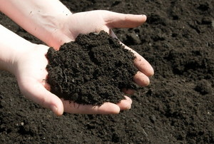 Topsoil 101: Basic Composition and Function