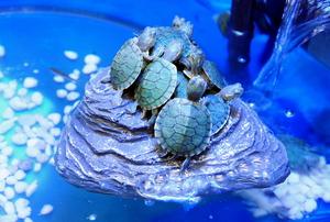 turtle pond with uv light