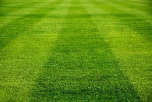a  lawn with mowing strips on it