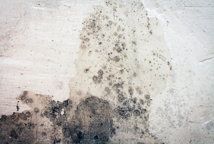 Mold growth shows on concrete.