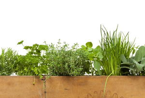 A variety of herbs growing in a wood box.