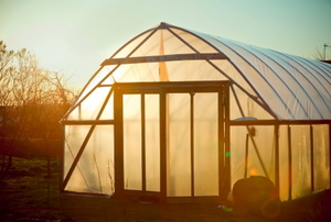 A garden greenhouse glowing in the sunset.