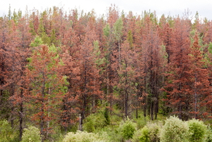 a forest of red and green trees