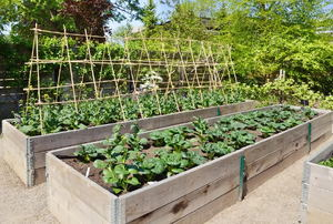 A backyard garden with planter boxes and a trellis.