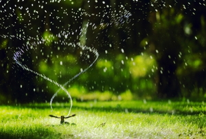 a spinning sprinkler watering a green lawn