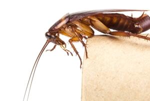 closeup of a roach